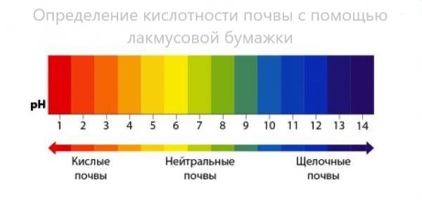Определение кислотности почвы с помощью лакмусовой бумажки