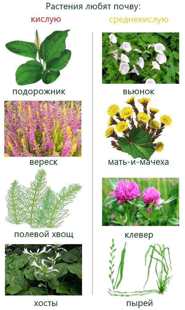 Определение кислотности почвы с помощью растений